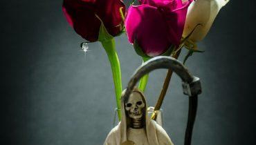 santa muerte plantas